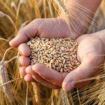 Bunge vê importação de trigo pelo Brasil 11% maior em 2019 após quebra de safra