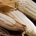 Cultivar de milho branco é alternativa para panificação sem glúten